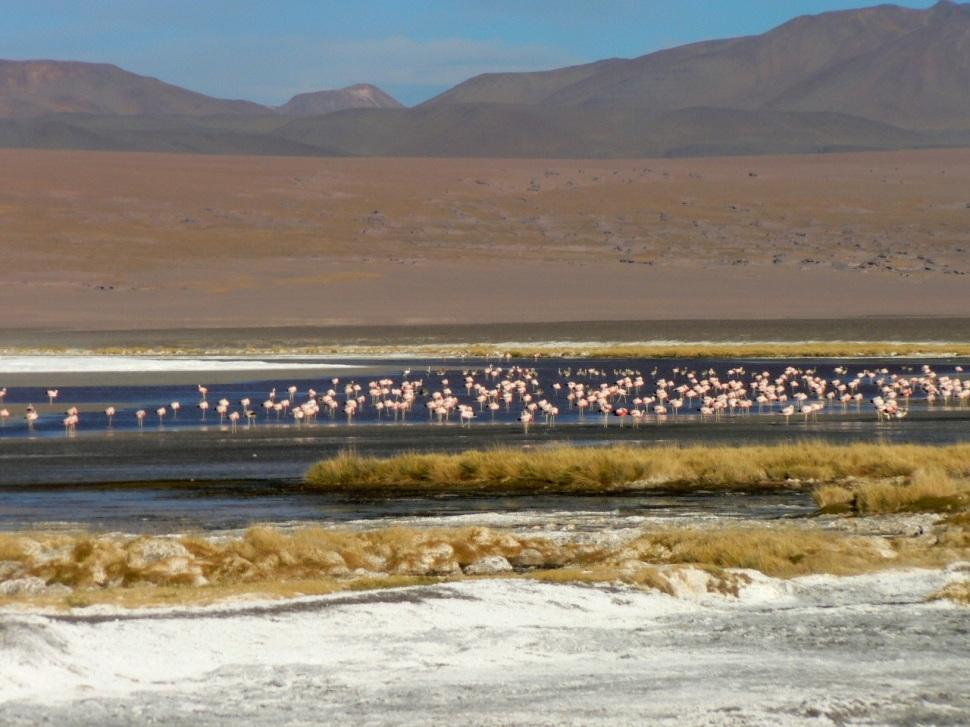 Lagunes Flamands Bolivie