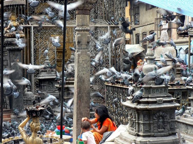 Népal01