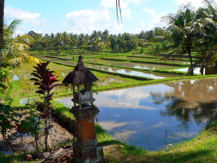Riziere Bali 2