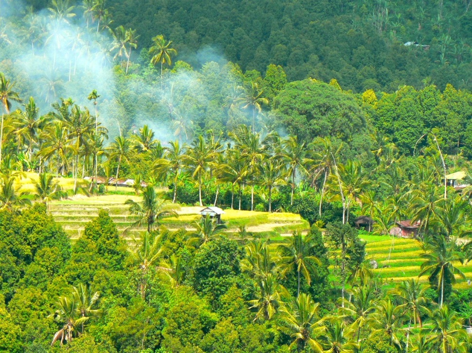 Rizieres Bali