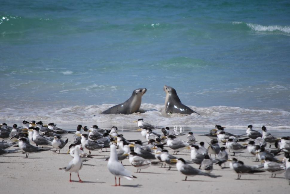05_Kangaroo Island