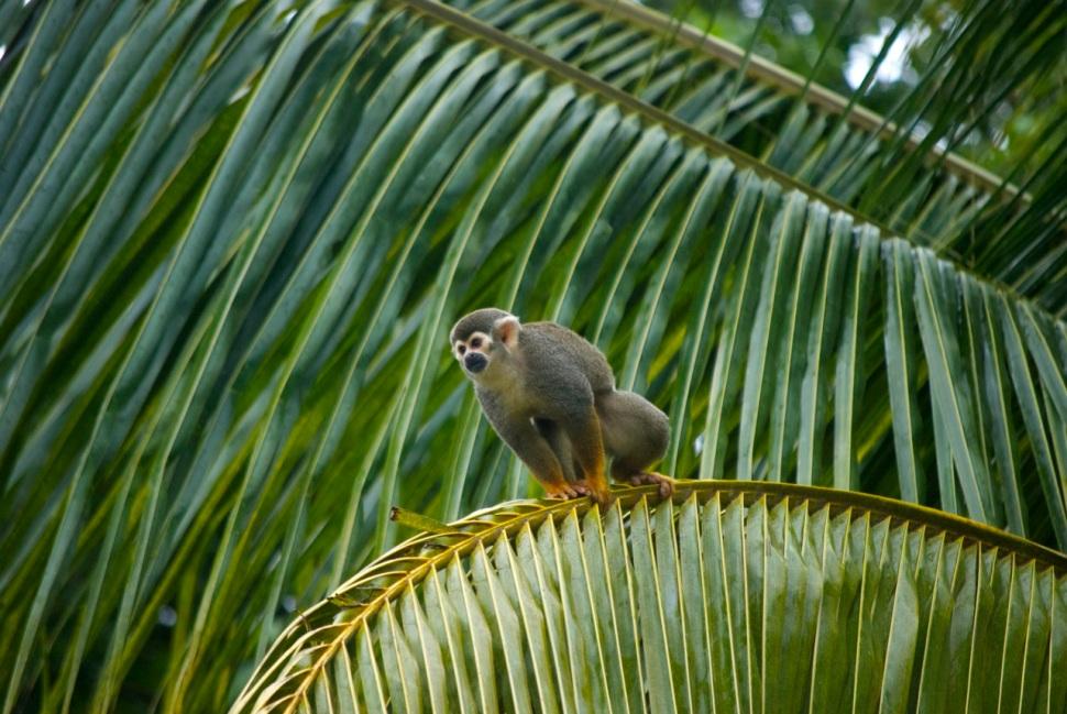 07_Guyane singe