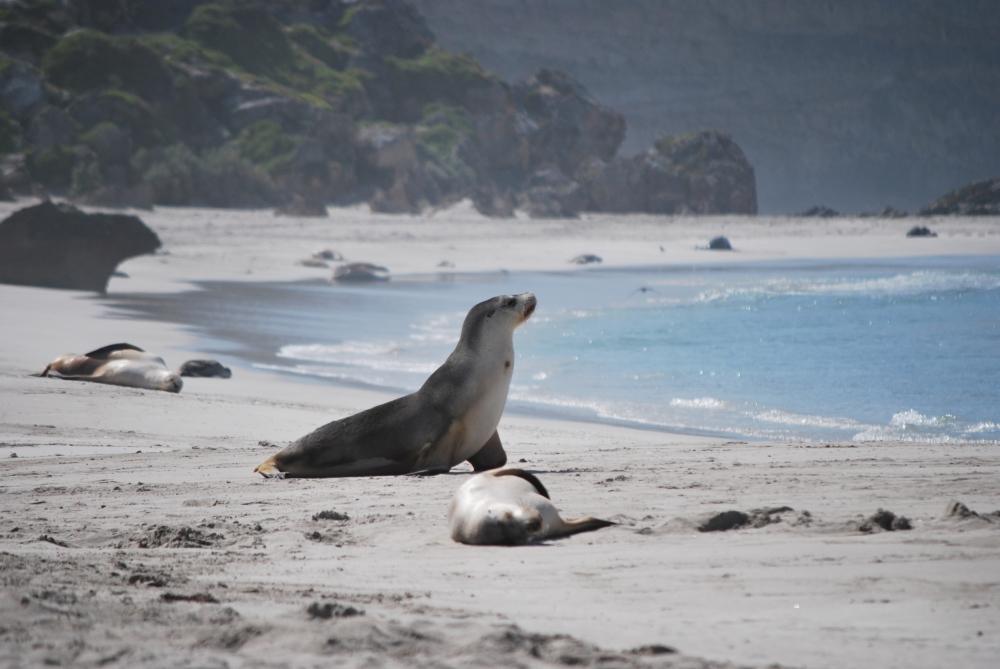 Australie-Kangaroo-Island