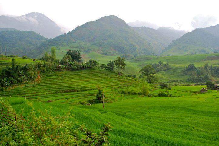 Vietnam-rizieres